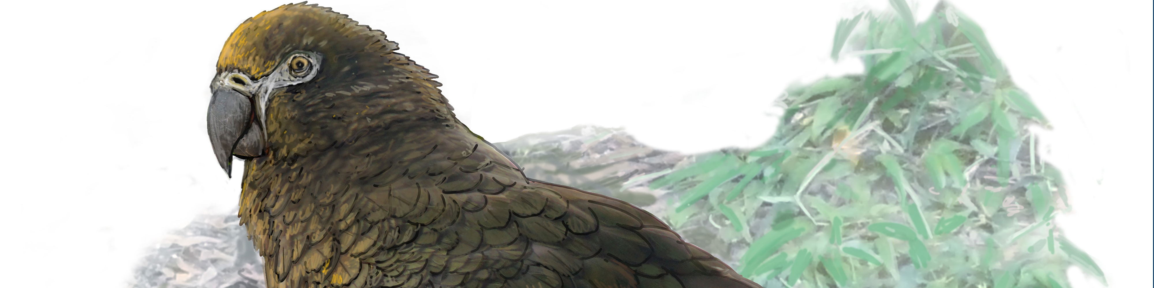 World S Largest Parrot Squawkzilla Discovered Curious