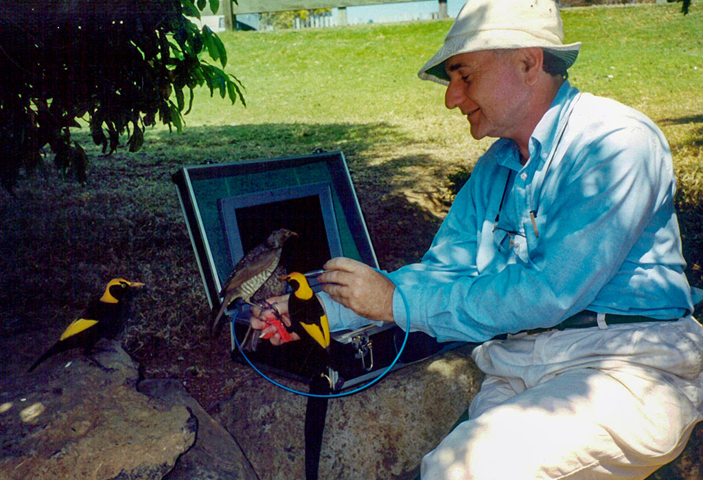 A person (John Endler), seated outside, with two birds perched on his arm. He is using a probe connected to a laptop-like data logger to scan the birds' feathers.