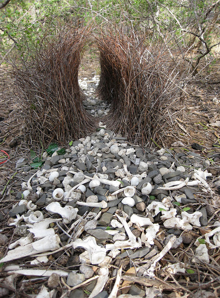 A tunnel-like arrangement of sticks on the ground, with grey and white pebbles of varying size placed at each end.