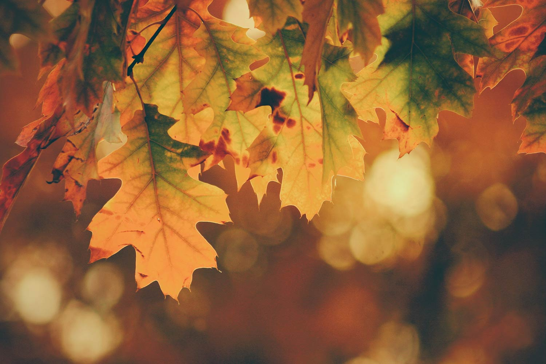 Autumn Leaves Curious