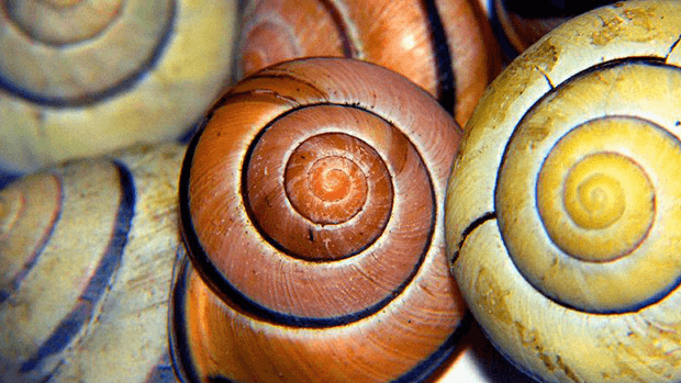 Shell colours.