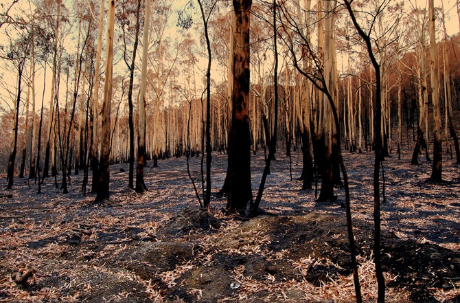 Aftermath from the 2009 Victorian bushfires.