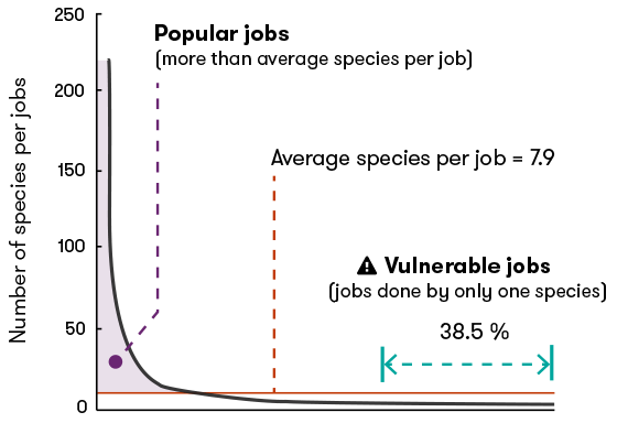 A diagram showing the number of species per job among fish assemblages in the Indo-Pacific region. 38.5 per cent of jobs are vulnerable, meaning they are only done by one species.