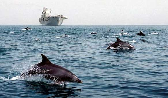 Dolphins in the foreground, with a large military ship in the background