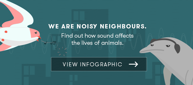 conclusion of noise pollution