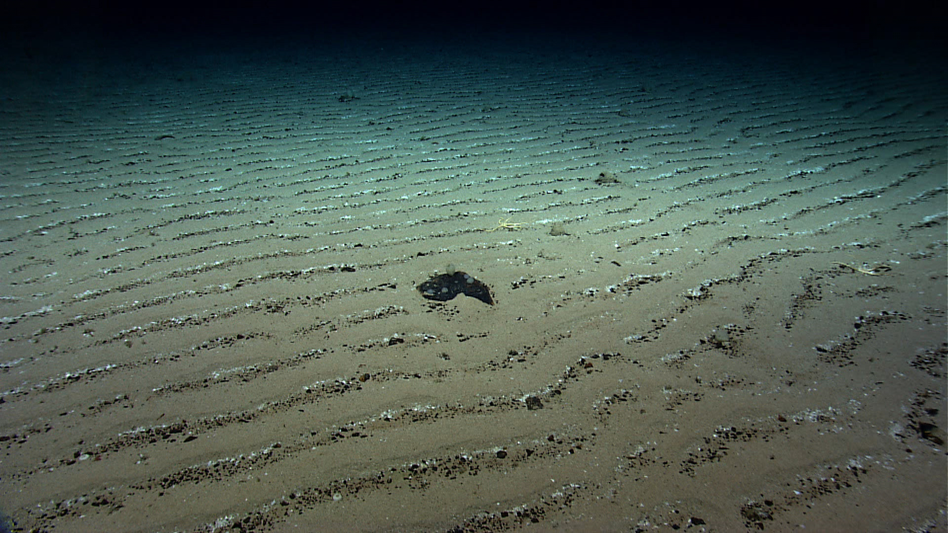 A picture of sediments on the seafloor.