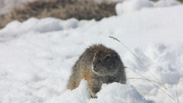 A squirrel in the snow.