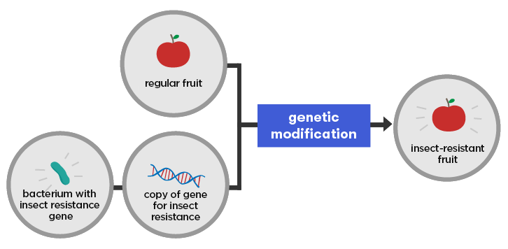 What is genetic modification? - CuriousAustralian Academy of Science