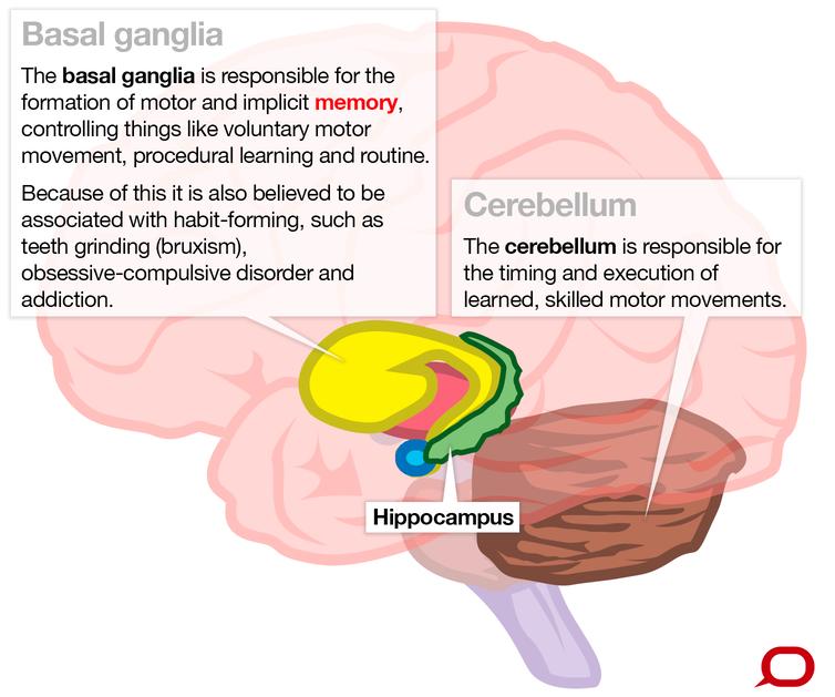 Brain diagram highlighting basal ganglia and cerebellum