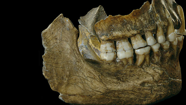 Mineral casting of jaw from Neandertal.