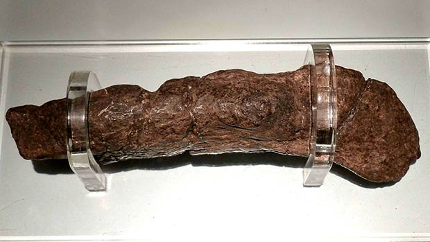 A photo of a human coprolite.