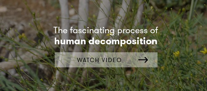 Human decomposition video