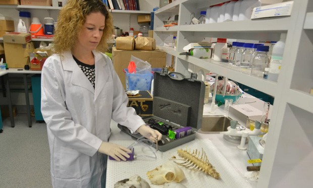 Professor Shari Forbes, head of the AFTER centre, assessing samples in the lab.