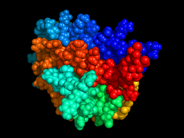 A molecular model of Erythropoietin (EPO)