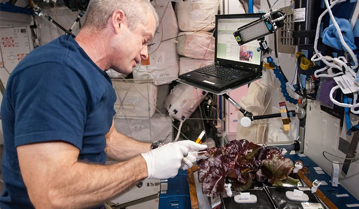 An astronaut harvests lettuce grown on the International Space Station