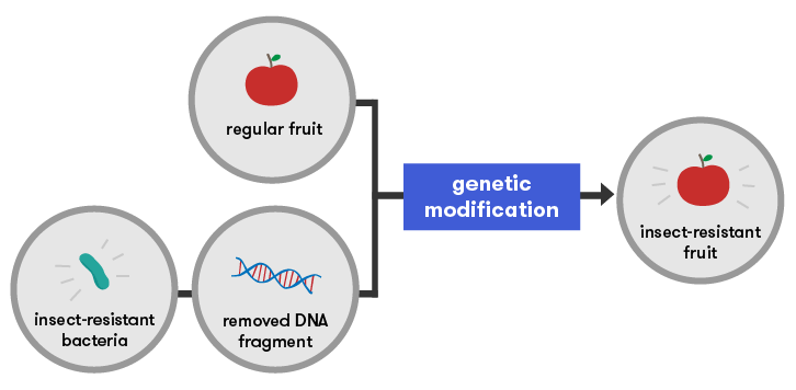 gene technology Molecular genetic technologists study the role of genetics in medicine, mendelian   the program in molecular genetic technology is a three-semester, highly.