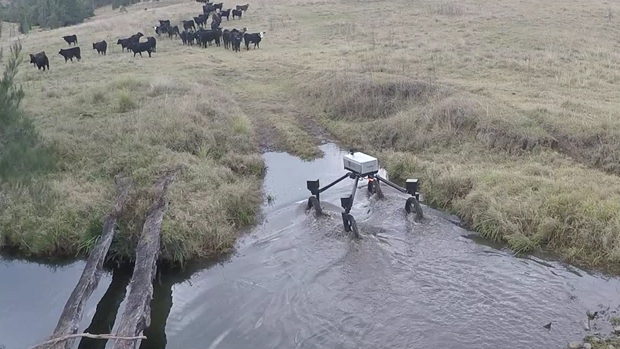 SwagBot negotiates a waterway with cows looking on