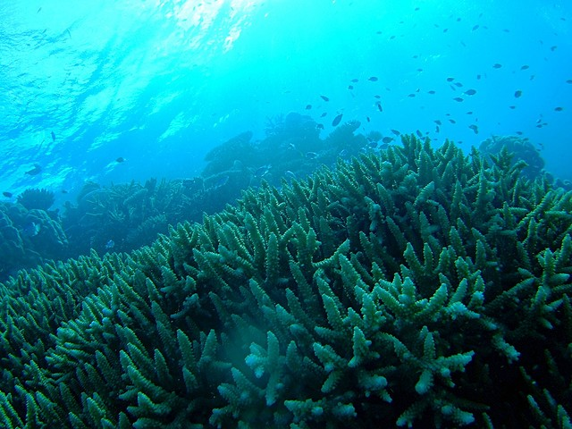 Corals as part of an ecosystem in the Great Barrier Reef.