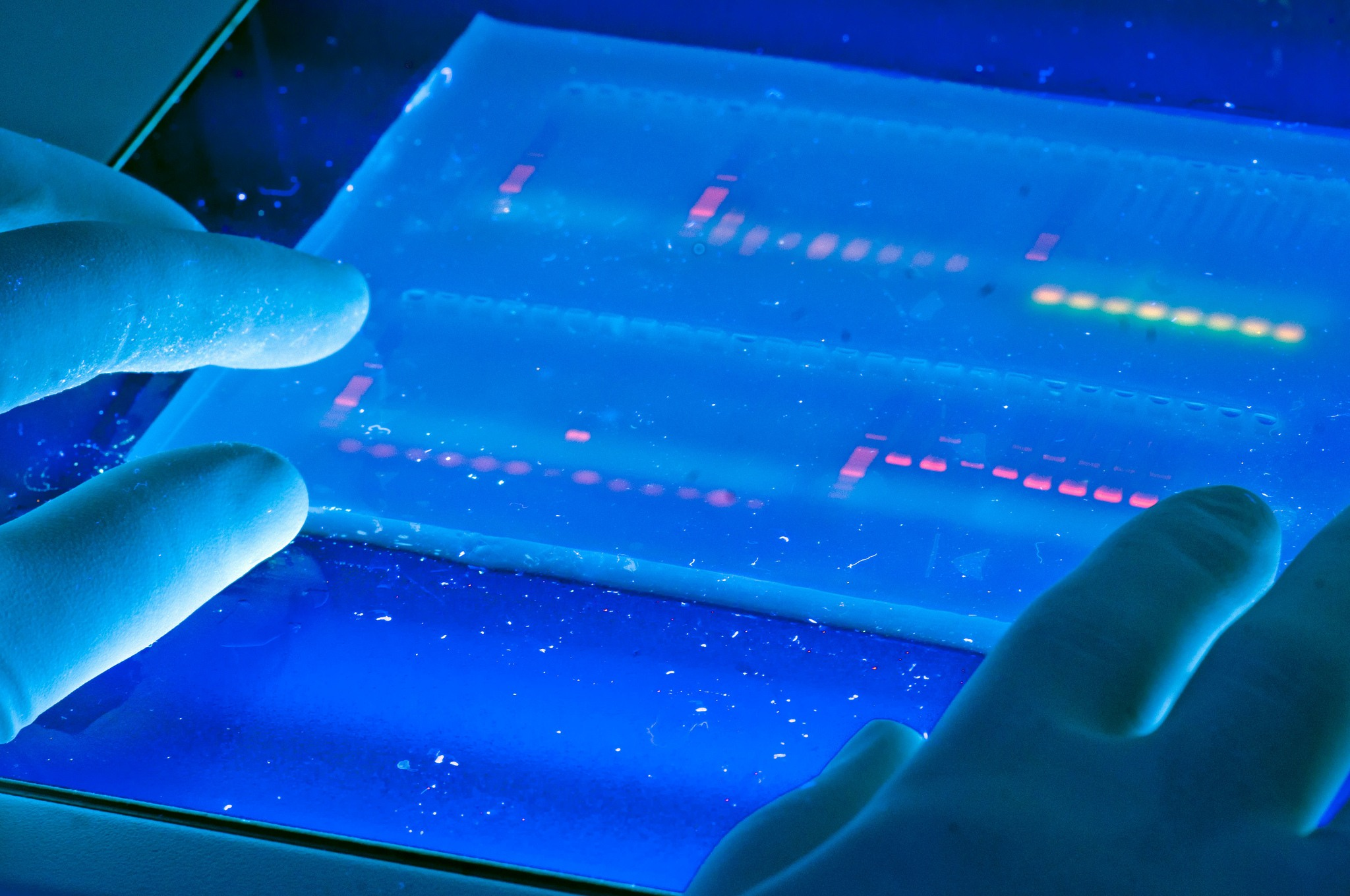 A researcher reviews a DNA sequence