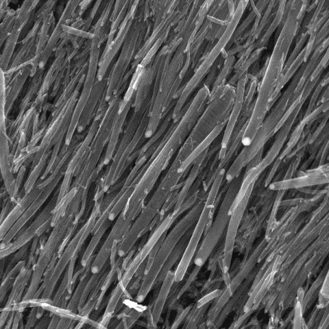 Carbon nanotubes close up view