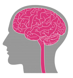 simple drawing of the human brain