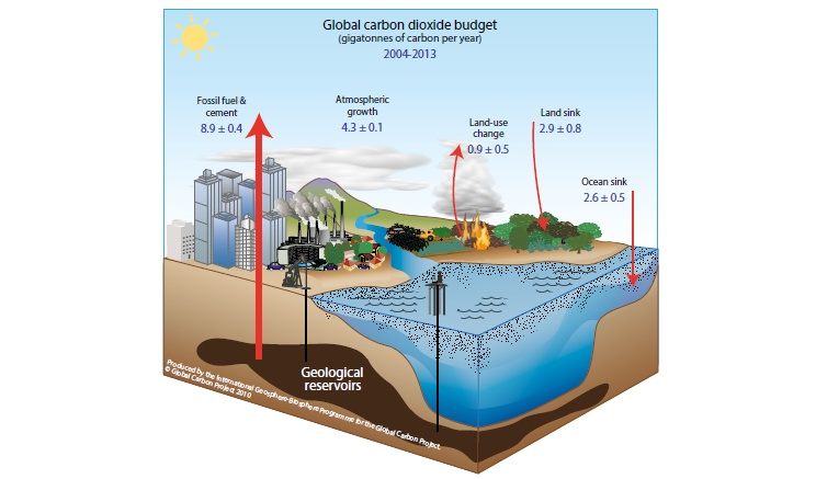The natural carbon cycle