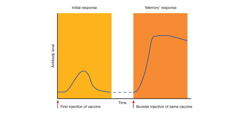 Figure 1.2 Effect of giving booster doses of vaccines