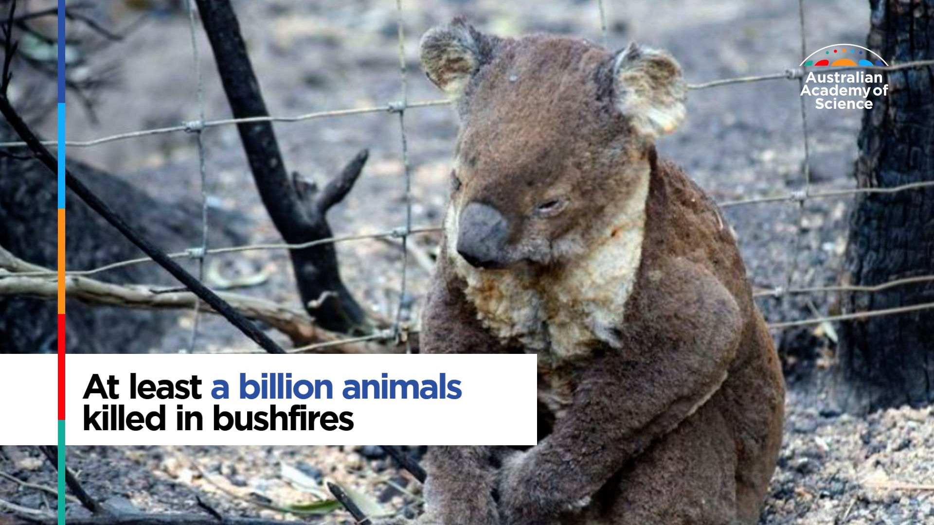 At least a billion animals killed in bushfires
