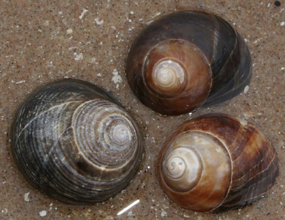 Name: Nikki. Prize: Shortlist. These shells relate to maths because each shell has a ring around it or a spiral. I wonder if these shells relate to the golden ratio. I wonder how many ways this can relate to maths, the shells are a cone shape And has a corner and edge.