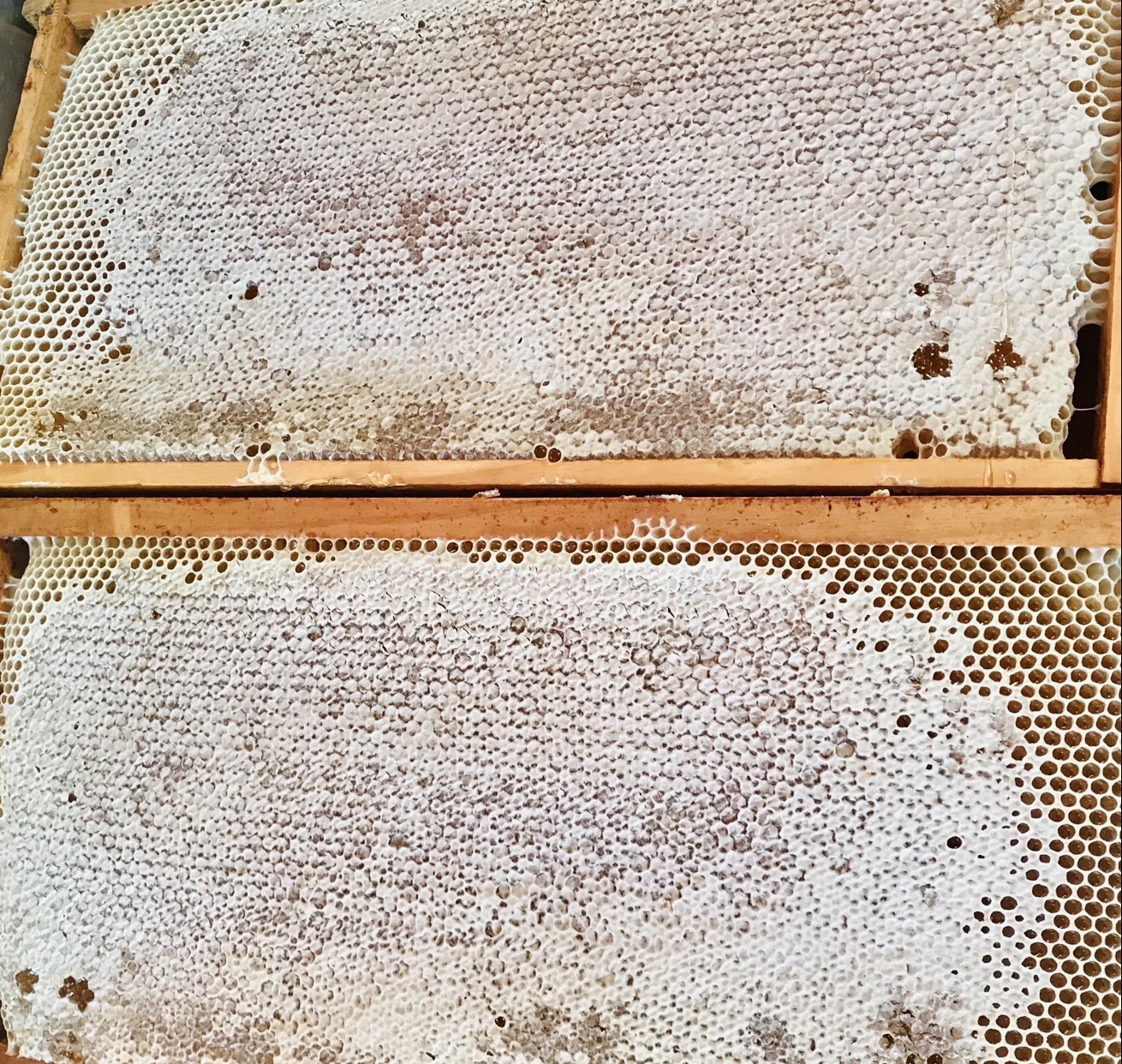 Name: Aydin. Prize: Shortlist. There are two honey frames in rectangle shapes. Each rectangle is 50 cm long and 25cm high and weighs 4 kilograms.  The bees fill up the hexagon shapes inside with honey. The hexagon has 6 sides and it is a repeated pattern with no gaps.