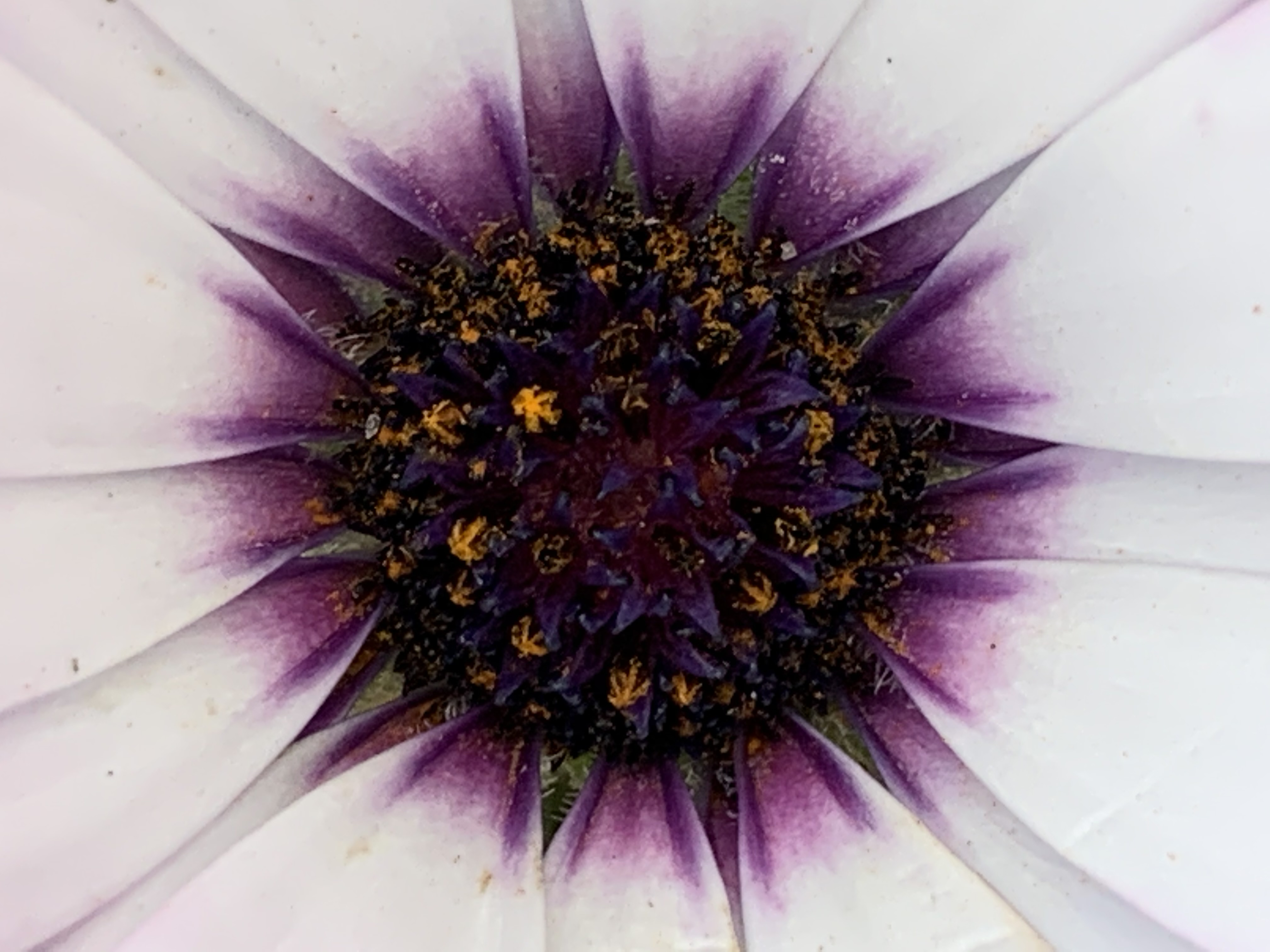 Name: Liv. Prize: Shortlist. There are lots of maths in this flower: fractals with small purple flowers and even smaller orange ones inside;  pattern of colours repeated on each petal; shapes: circle in the middle, triangles between the petals and stars in the center.
